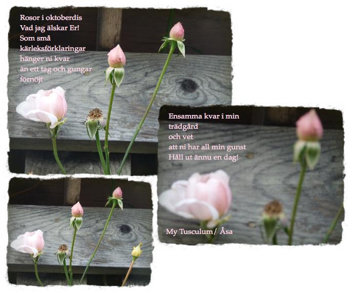 Skärmavbild 2013-11-01 kl. 20.55.41