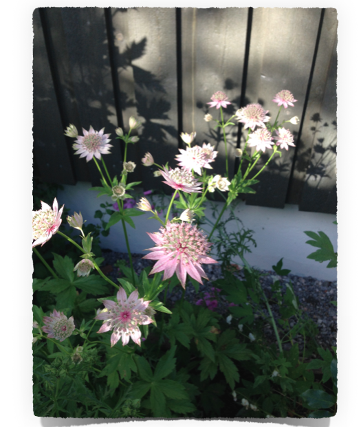 Skärmavbild 2014-06-23 kl. 21.34.21