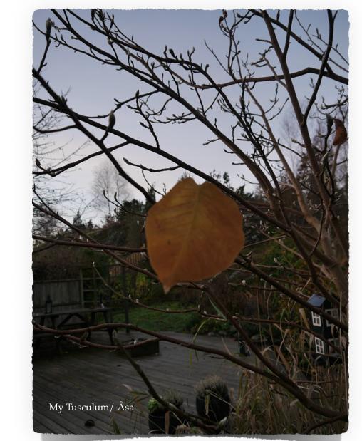 Skärmavbild 2014-11-12 kl. 17.48.58